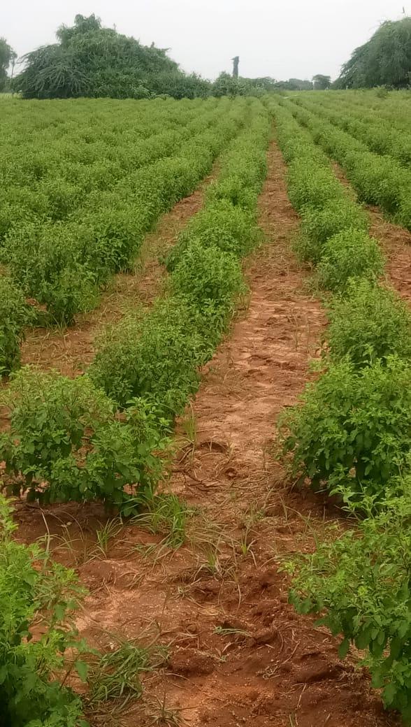 Tulasi Farm